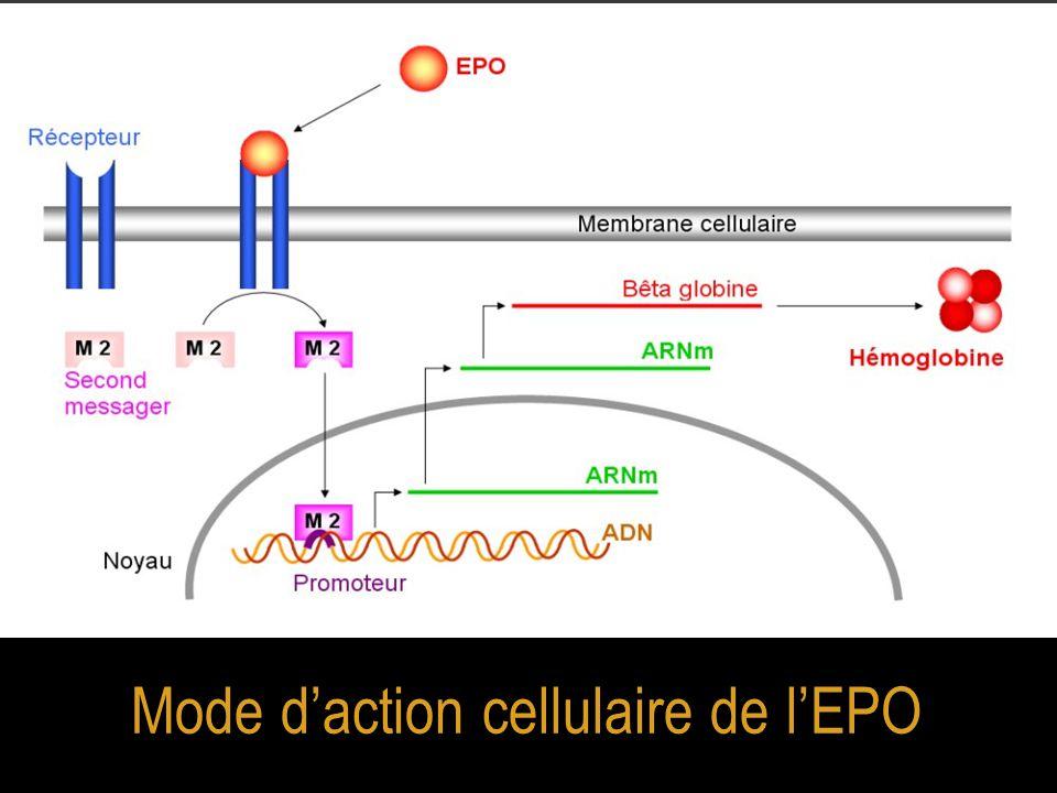 Mode d'action cellulaire de l'EPO