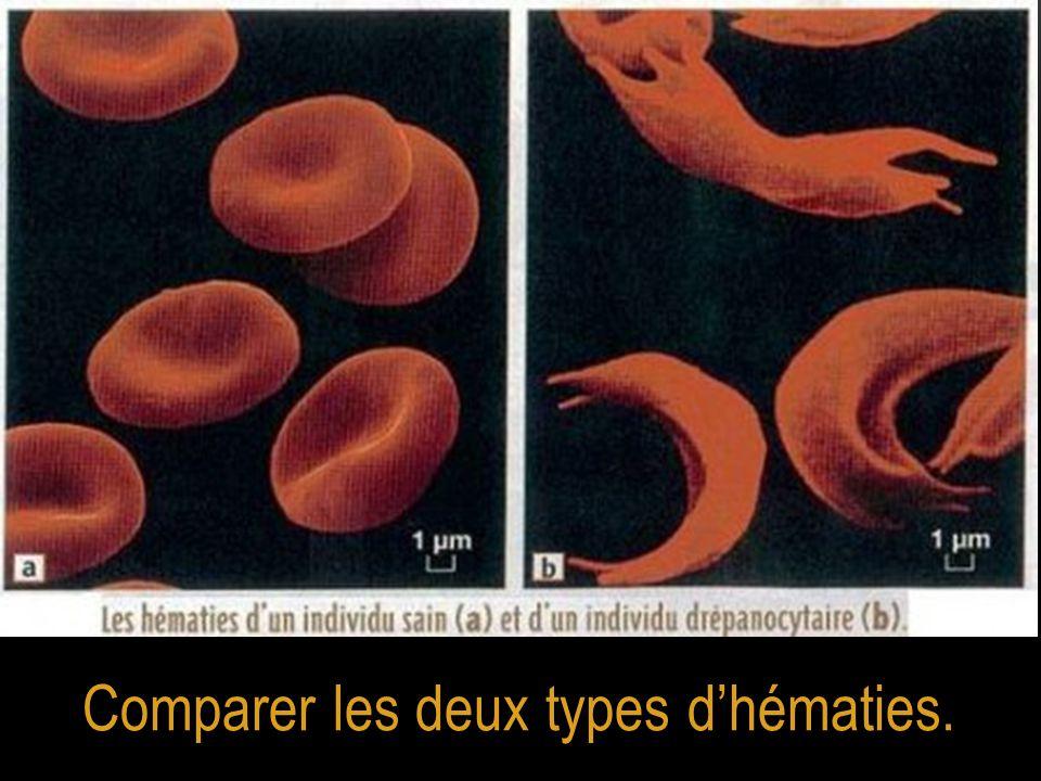 Comparer les deux types d'hématies.
