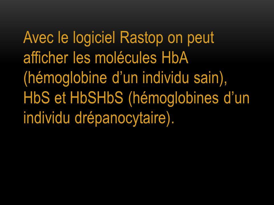 Avec le logiciel Rastop on peut afficher les molécules HbA (hémoglobine d'un individu sain), HbS et HbSHbS (hémoglobines d'un individu drépanocytaire).
