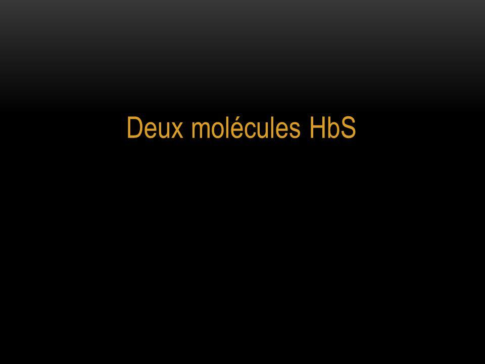 Deux molécules HbS