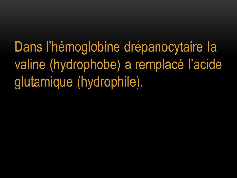Dans l'hémoglobine drépanocytaire la valine (hydrophobe) a remplacé l'acide glutamique (hydrophile).