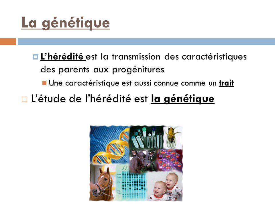 La génétique L'étude de l'hérédité est la génétique