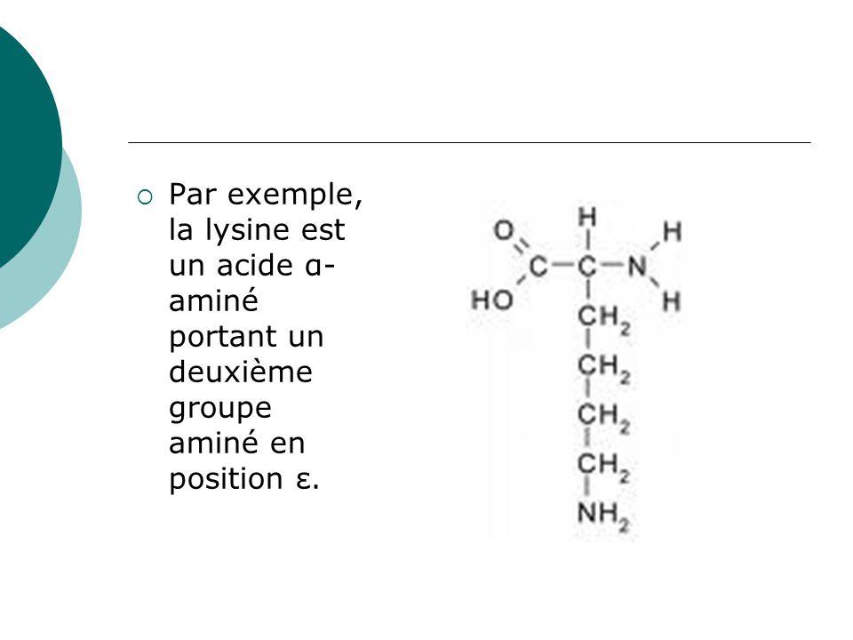 Par exemple, la lysine est un acide α-aminé portant un deuxième groupe aminé en position ε.