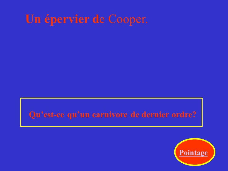 Un épervier de Cooper. Qu'est-ce qu'un carnivore de dernier ordre