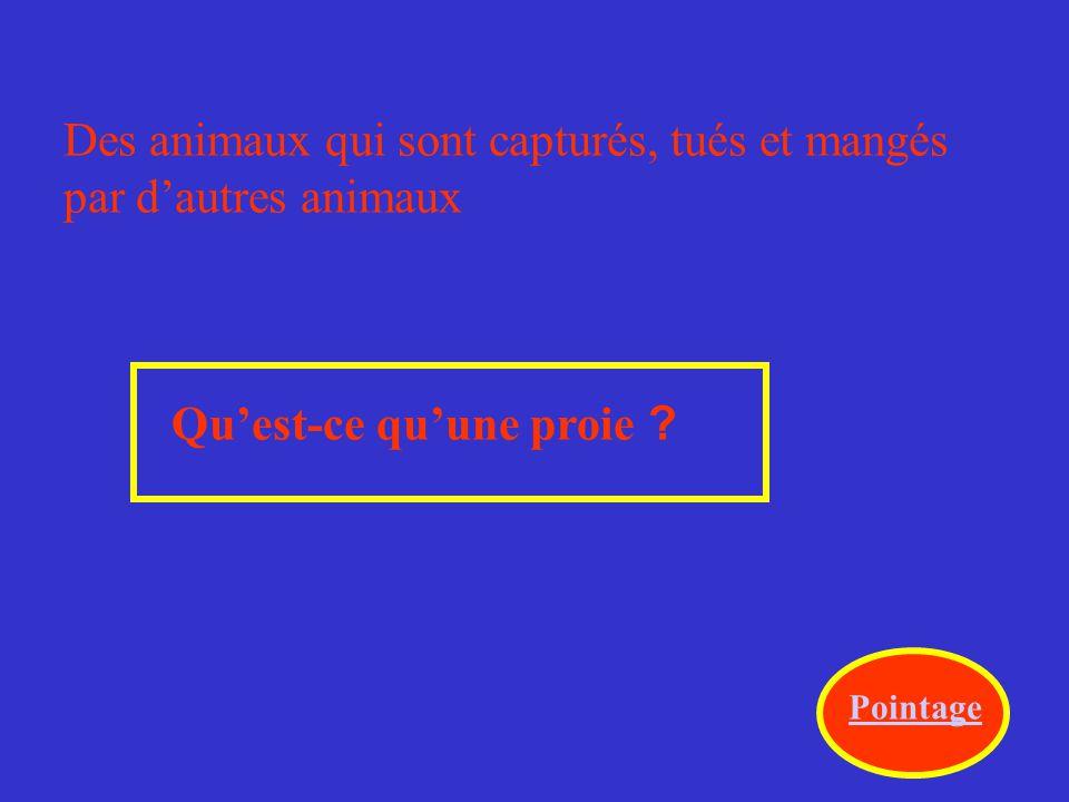 Des animaux qui sont capturés, tués et mangés par d'autres animaux
