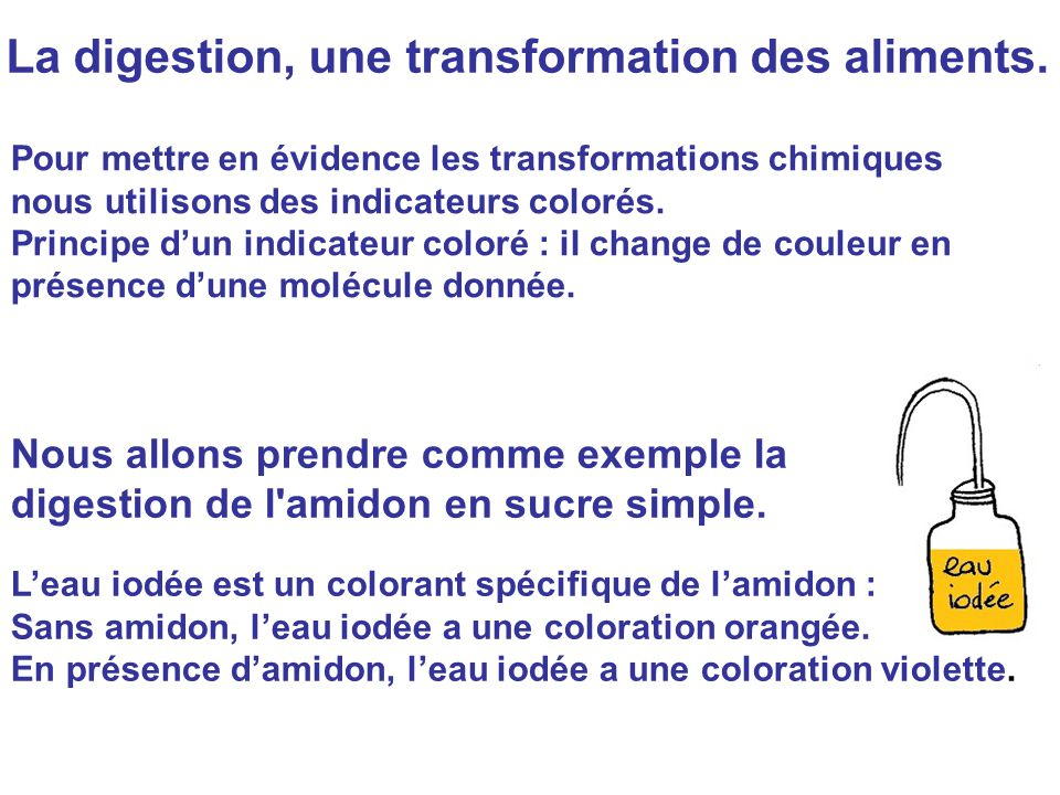 La digestion, une transformation des aliments.