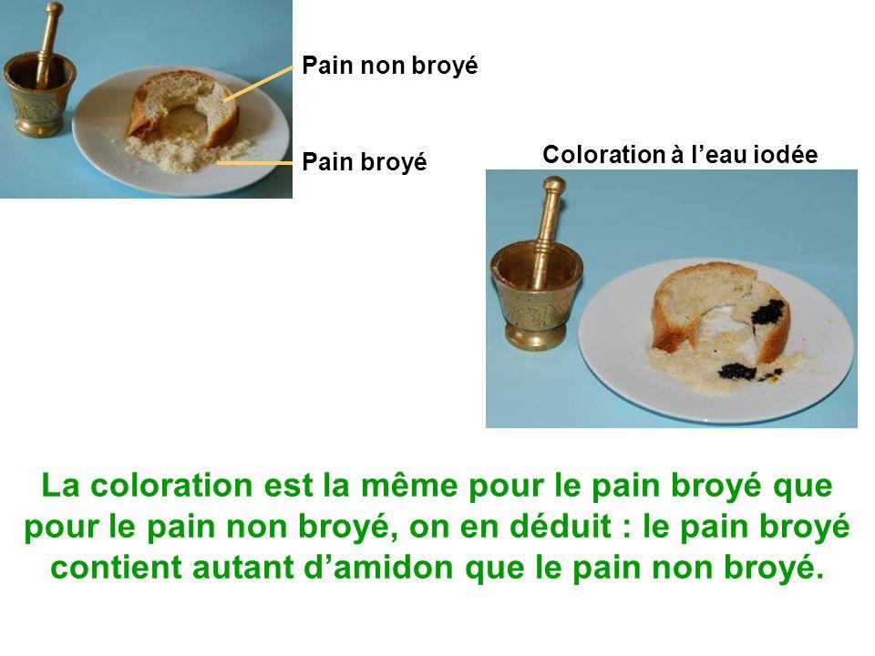 Pain non broyé Coloration à l'eau iodée. Pain broyé.