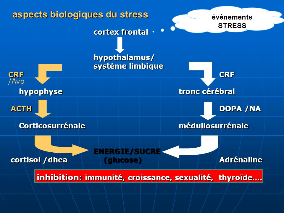 aspects biologiques du stress