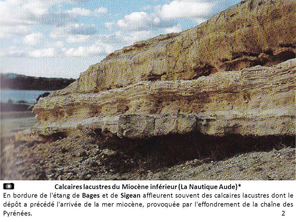 Calcaires lacustres du Miocène inférieur (La Nautique Aude)*