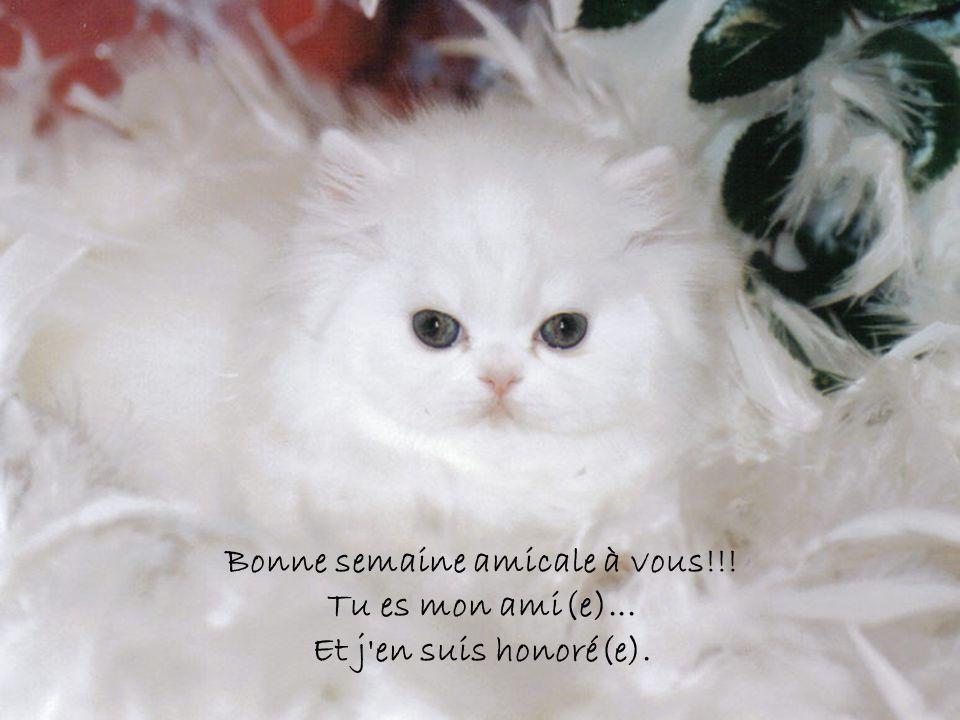 Bonne semaine amicale à vous!!! Tu es mon ami(e)... Et j en suis honoré(e).