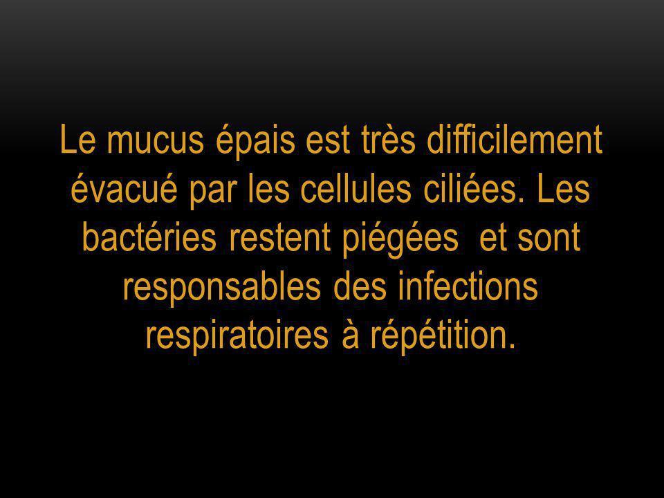 Le mucus épais est très difficilement évacué par les cellules ciliées
