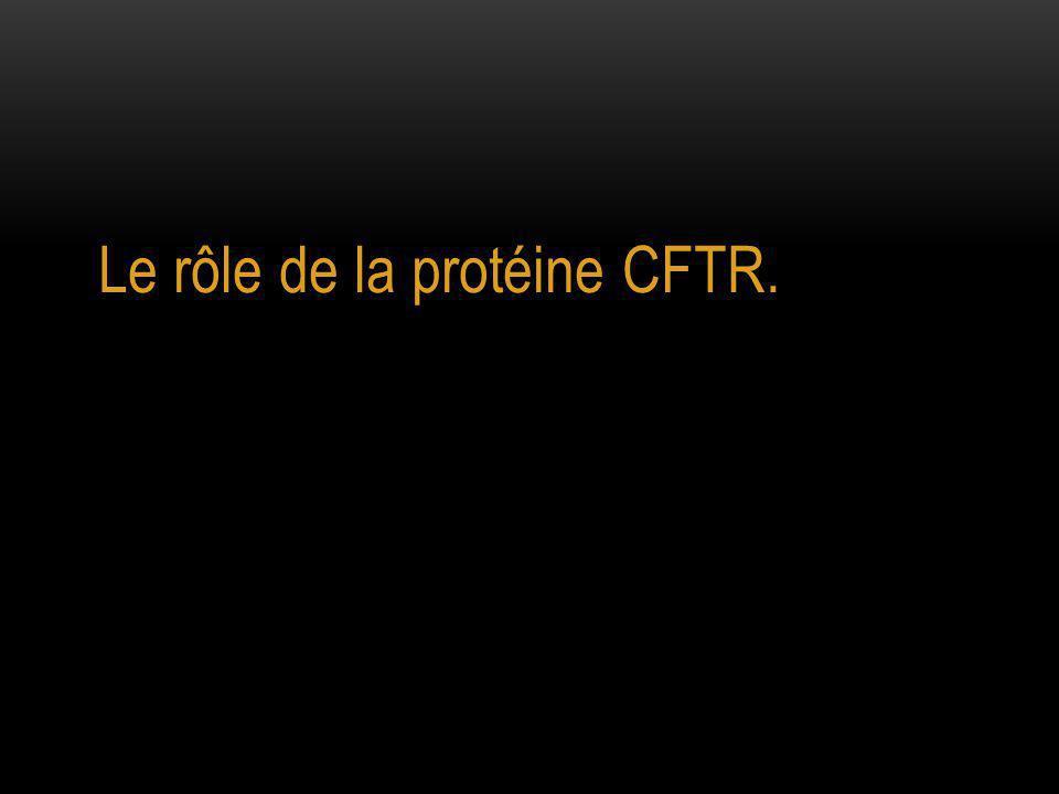 Le rôle de la protéine CFTR.