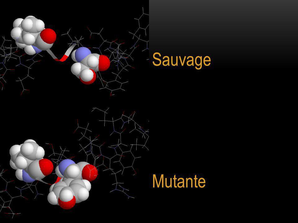Sauvage Mutante