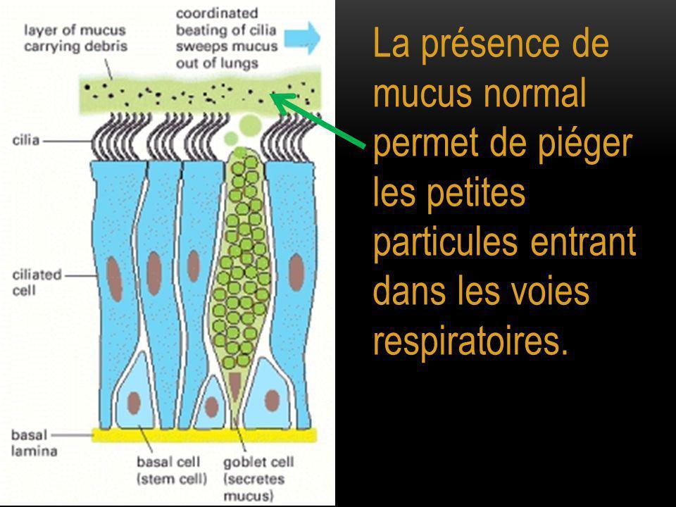 La présence de mucus normal permet de piéger les petites particules entrant dans les voies respiratoires.