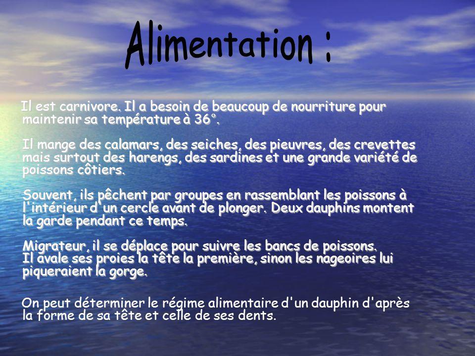 Alimentation :