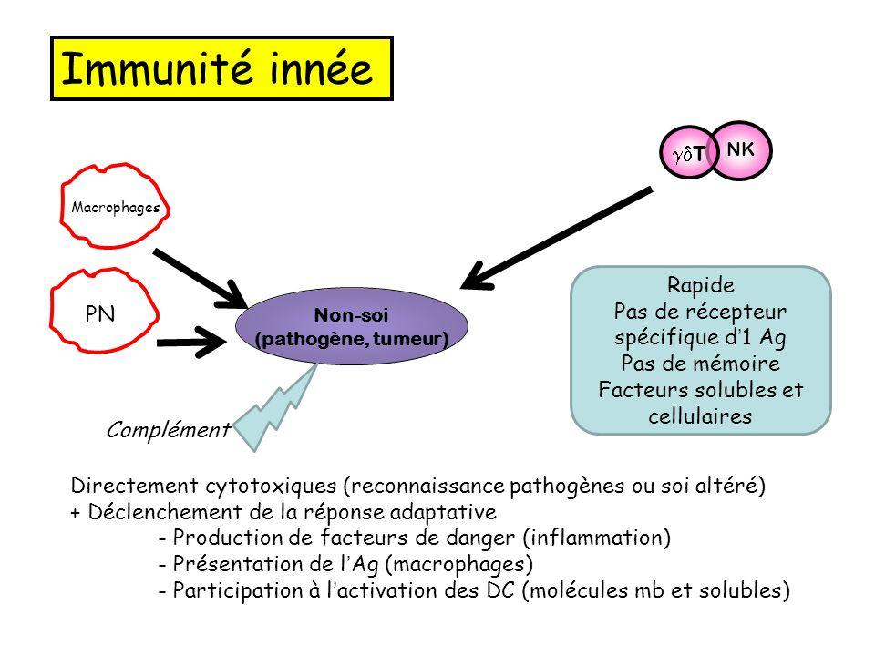 Immunité innée gdT Rapide Pas de récepteur spécifique d'1 Ag PN