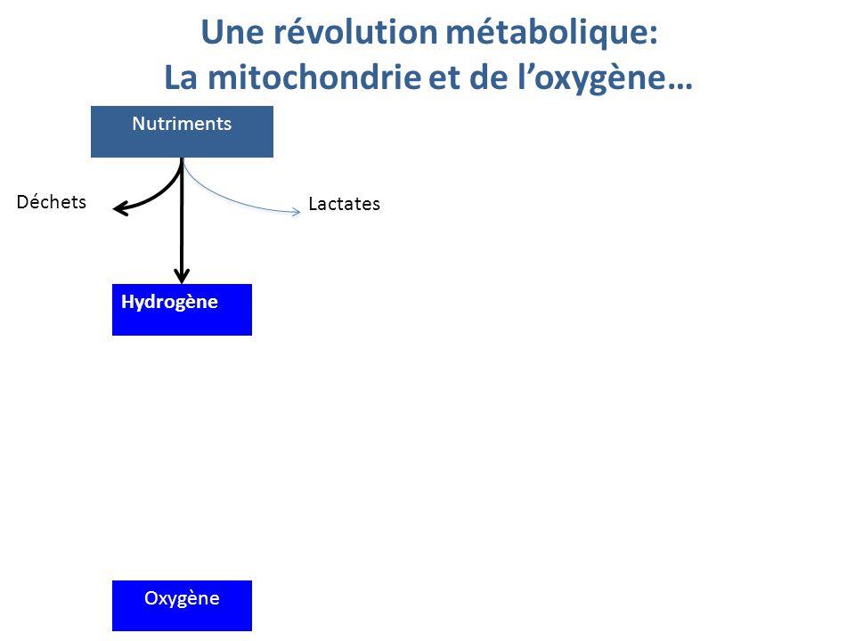 Une révolution métabolique: La mitochondrie et de l'oxygène…