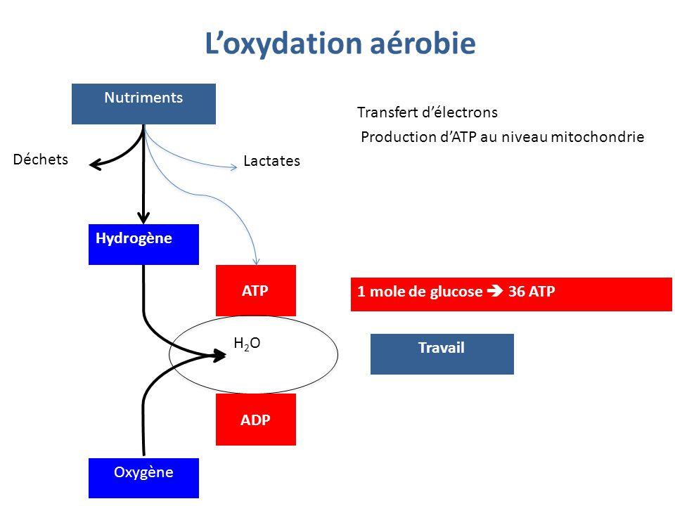 L'oxydation aérobie Nutriments Transfert d'électrons