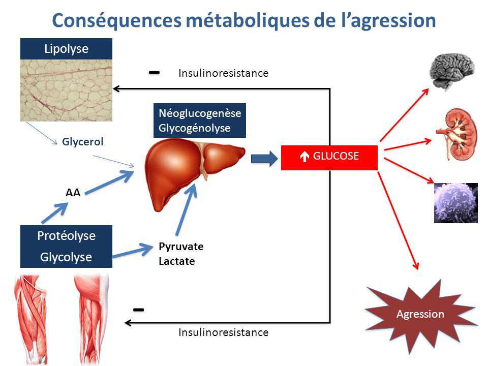 Conséquences métaboliques de l'agression