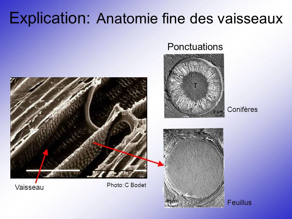 Explication: Anatomie fine des vaisseaux