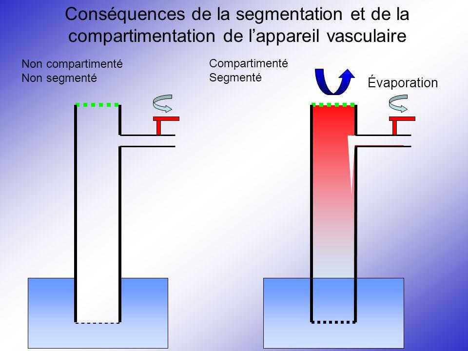 Conséquences de la segmentation et de la compartimentation de l'appareil vasculaire