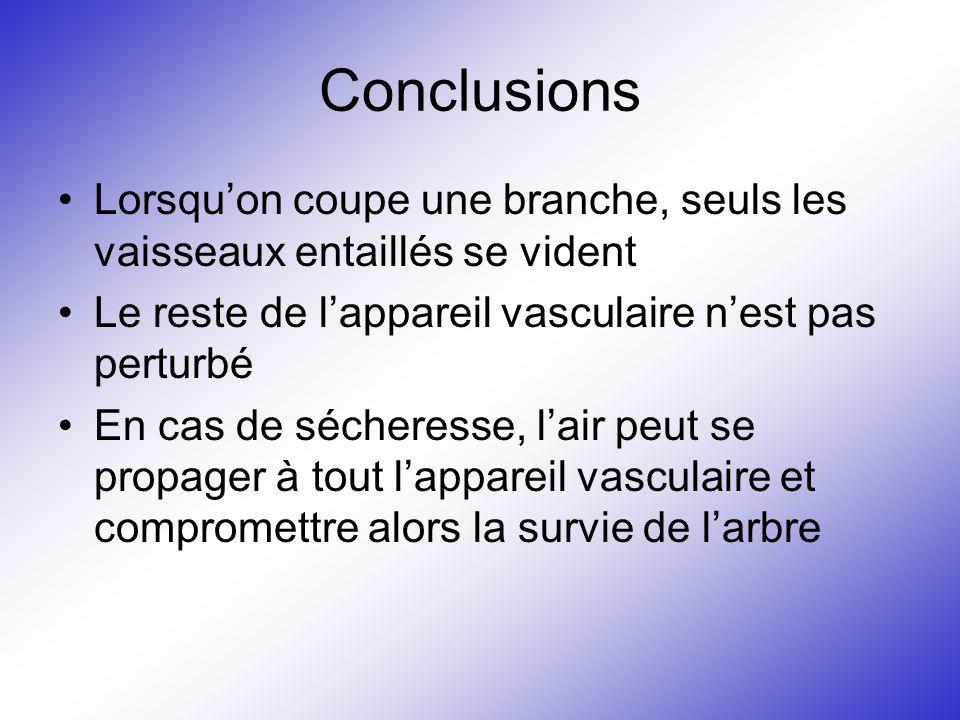 Conclusions Lorsqu'on coupe une branche, seuls les vaisseaux entaillés se vident. Le reste de l'appareil vasculaire n'est pas perturbé.