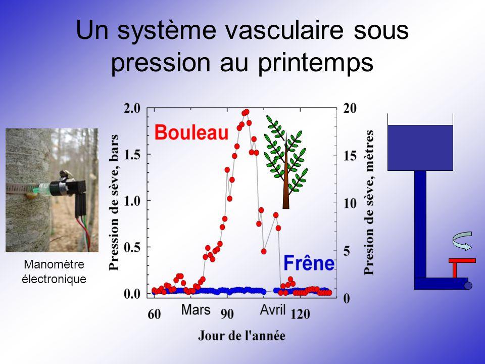 Un système vasculaire sous pression au printemps