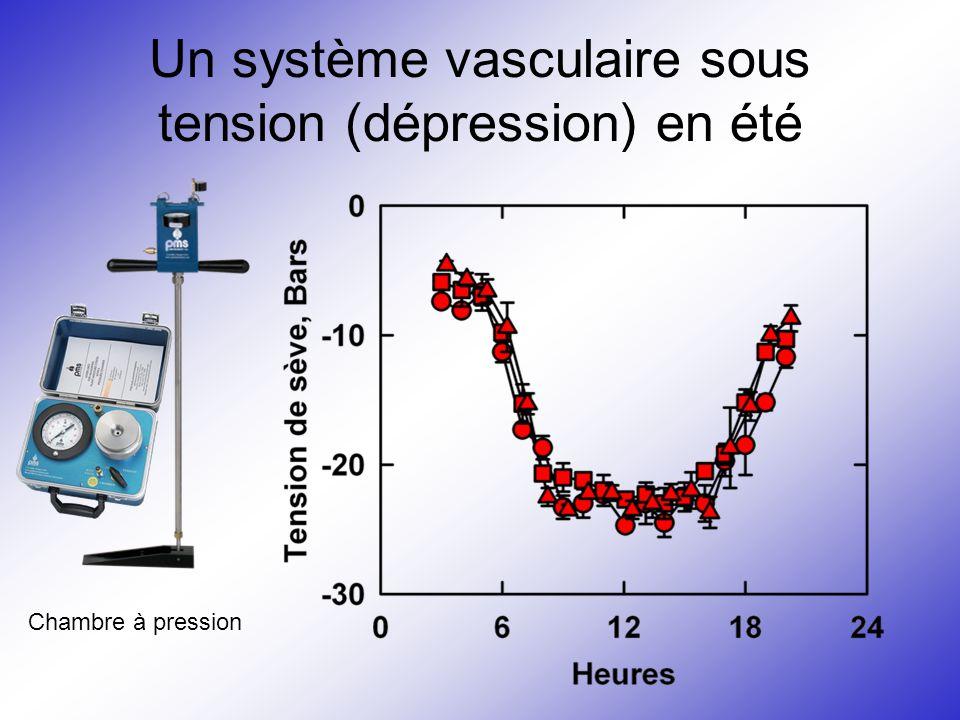 Un système vasculaire sous tension (dépression) en été
