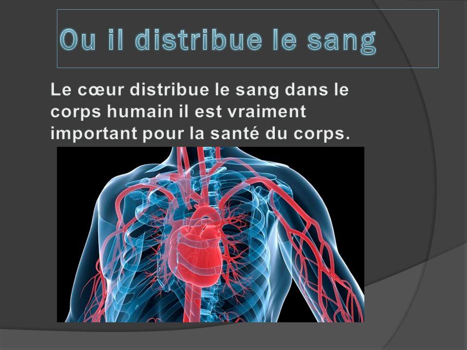 Ou il distribue le sang Le cœur distribue le sang dans le corps humain il est vraiment important pour la santé du corps.