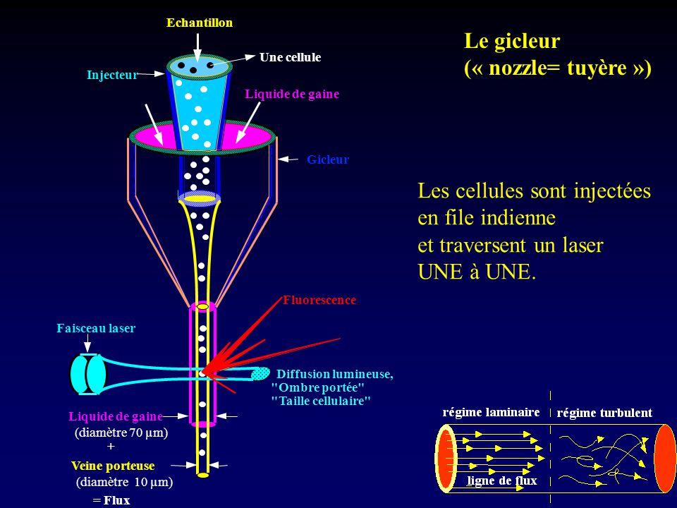 Les cellules sont injectées en file indienne et traversent un laser
