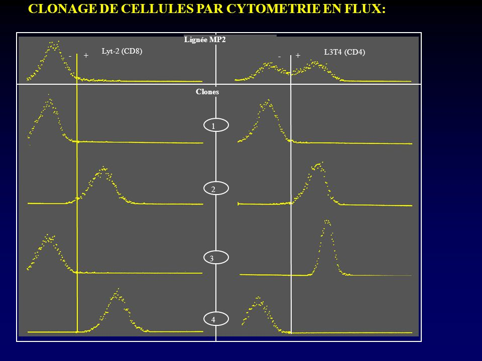 CLONAGE DE CELLULES PAR CYTOMETRIE EN FLUX: