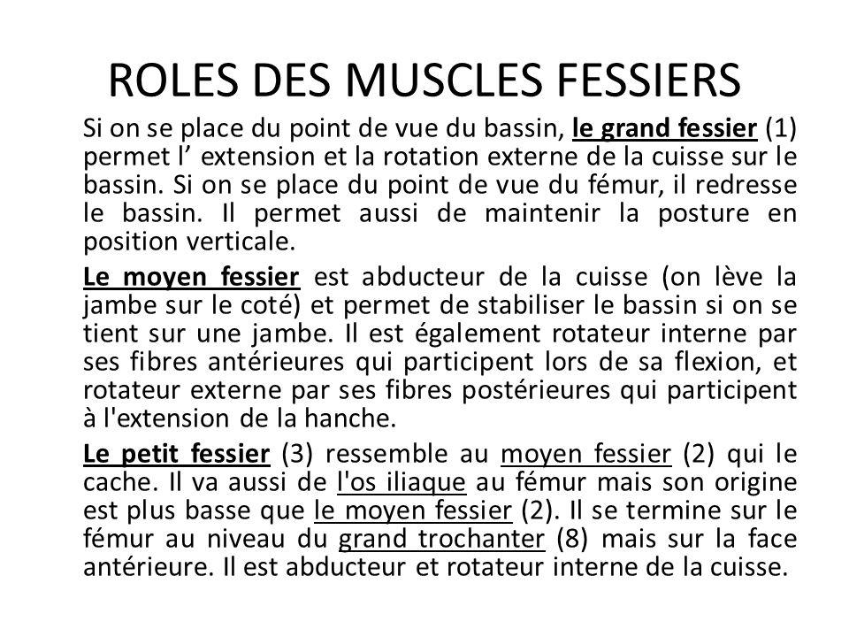 ROLES DES MUSCLES FESSIERS