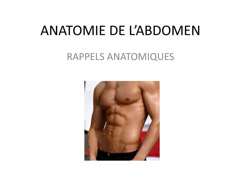 ANATOMIE DE L'ABDOMEN RAPPELS ANATOMIQUES