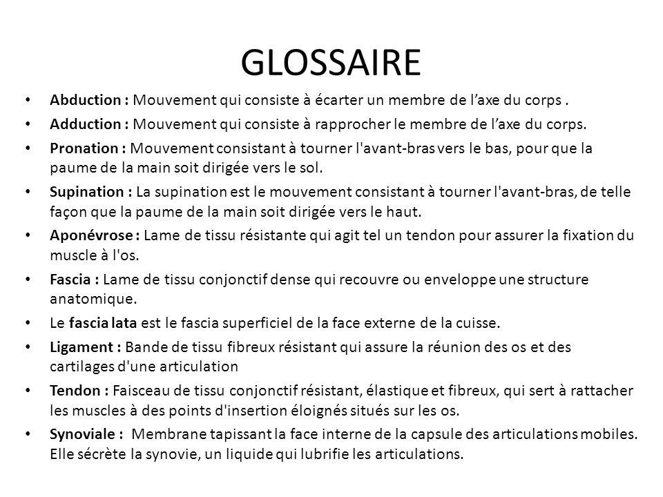 GLOSSAIRE Abduction : Mouvement qui consiste à écarter un membre de l'axe du corps .