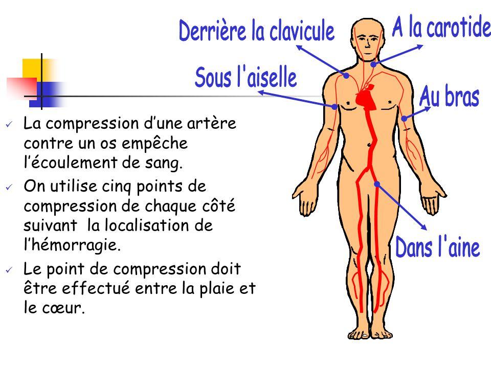 A la carotide Derrière la clavicule. Sous l aiselle. Au bras. La compression d'une artère contre un os empêche l'écoulement de sang.