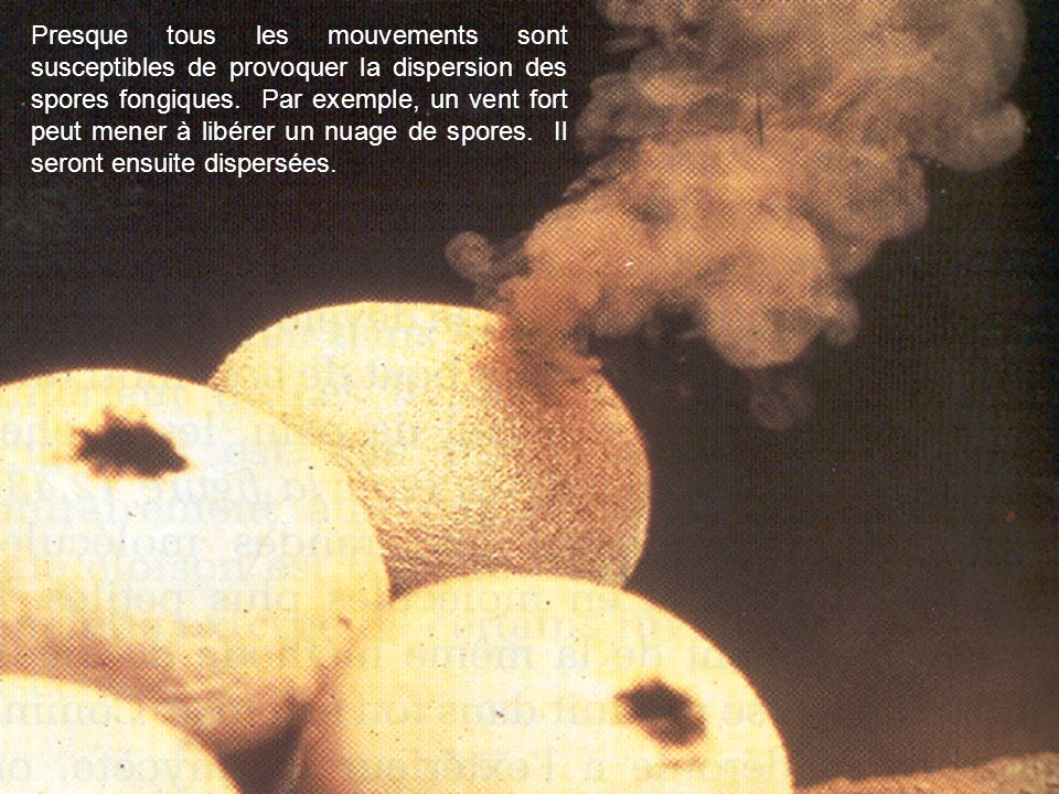 Presque tous les mouvements sont susceptibles de provoquer la dispersion des spores fongiques.