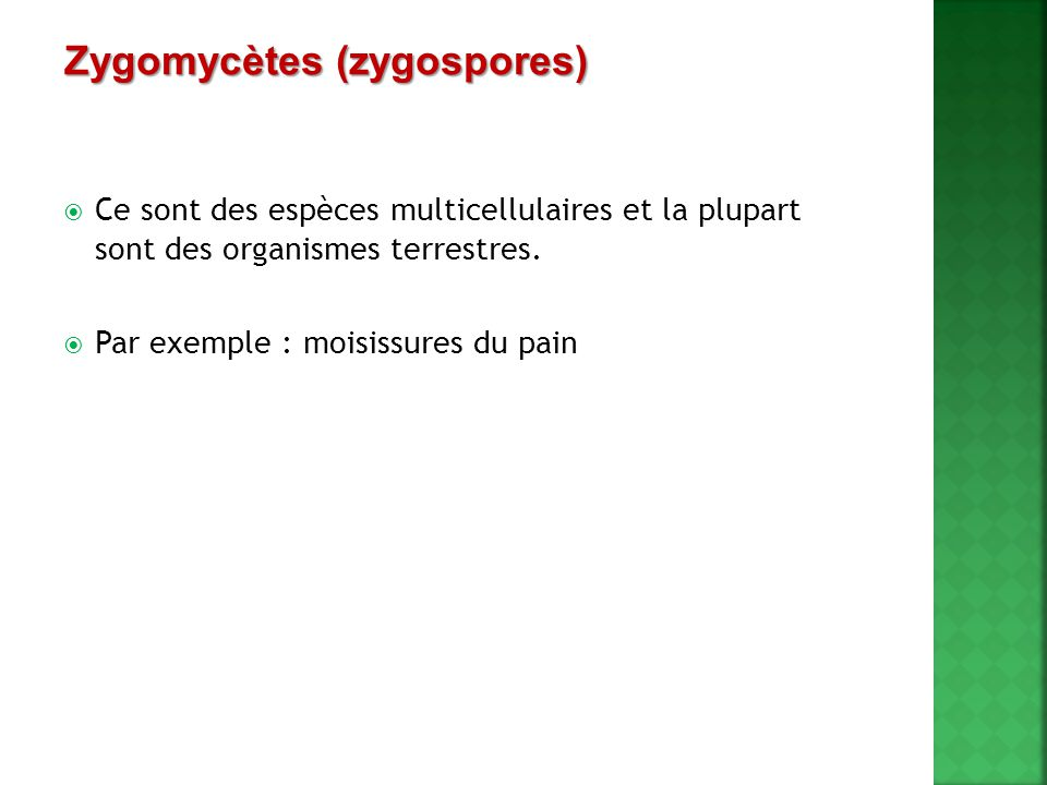 Zygomycètes (zygospores)