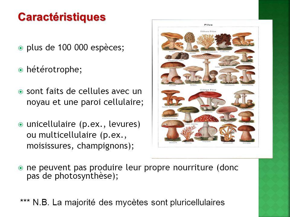 Caractéristiques plus de 100 000 espèces; hétérotrophe;