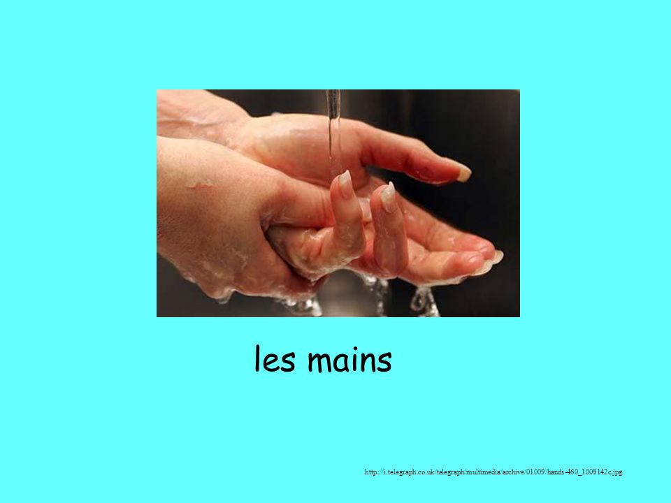 les mains http://i.telegraph.co.uk/telegraph/multimedia/archive/01009/hands-460_1009142c.jpg