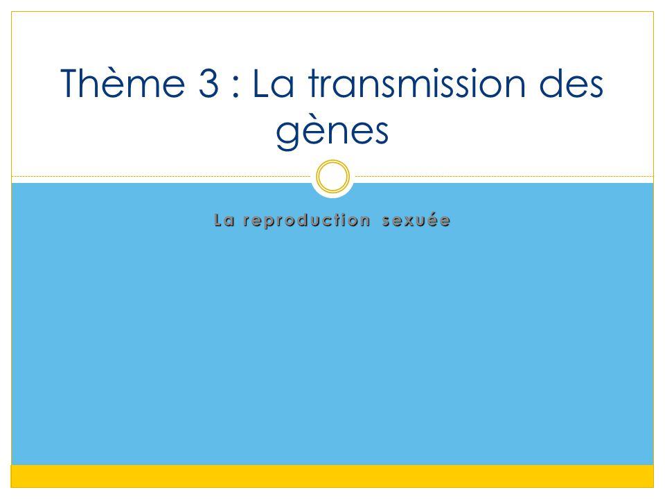 Thème 3 : La transmission des gènes