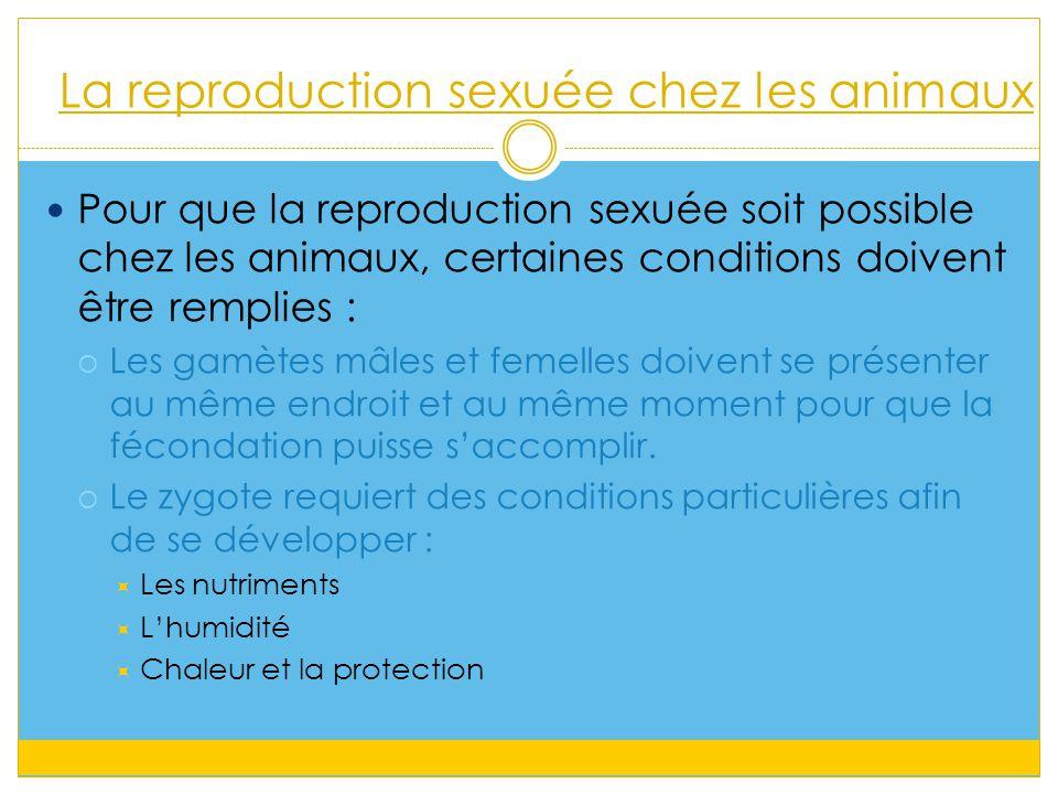 La reproduction sexuée chez les animaux