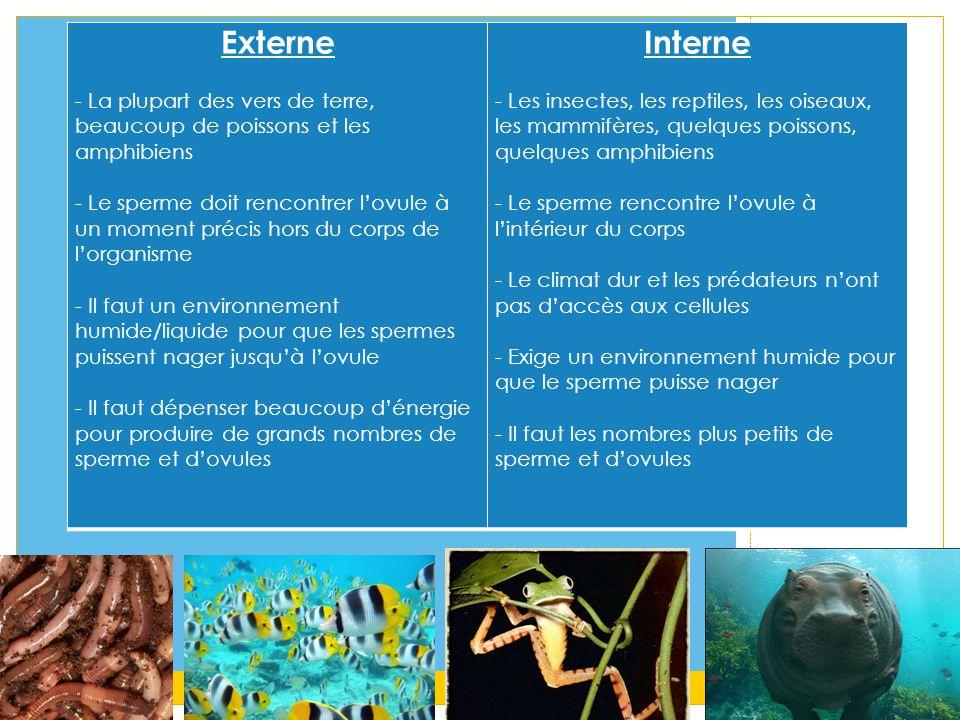 Externe - La plupart des vers de terre, beaucoup de poissons et les amphibiens.