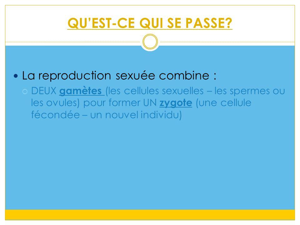 QU'EST-CE QUI SE PASSE La reproduction sexuée combine :