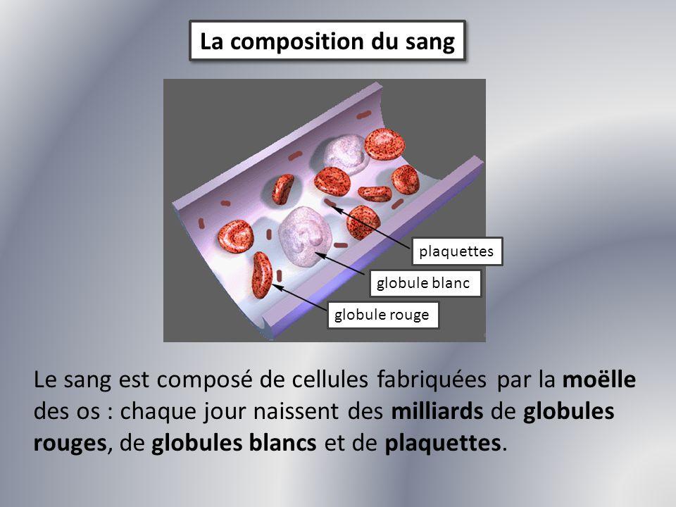 La composition du sang plaquettes. globule blanc. globule rouge.