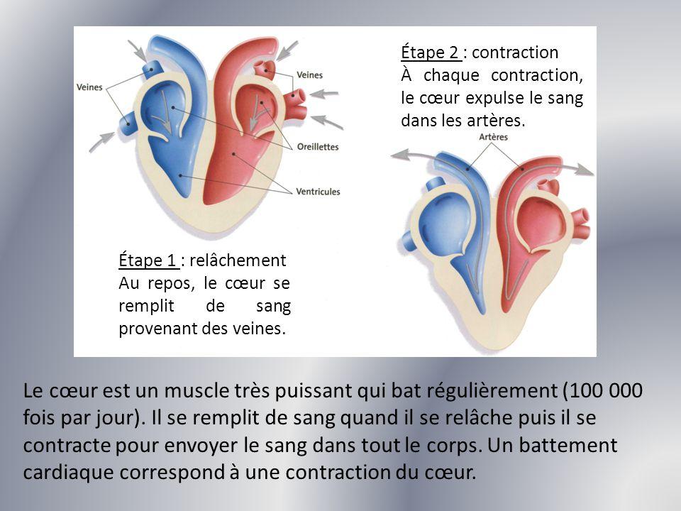 Étape 2 : contraction À chaque contraction, le cœur expulse le sang dans les artères. Étape 1 : relâchement.