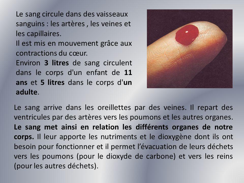 Le sang circule dans des vaisseaux sanguins : les artères , les veines et les capillaires.