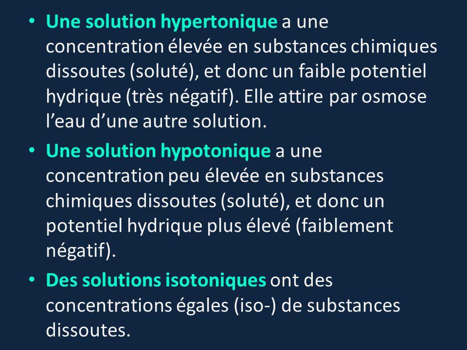 Une solution hypertonique a une concentration élevée en substances chimiques dissoutes (soluté), et donc un faible potentiel hydrique (très négatif). Elle attire par osmose l'eau d'une autre solution.