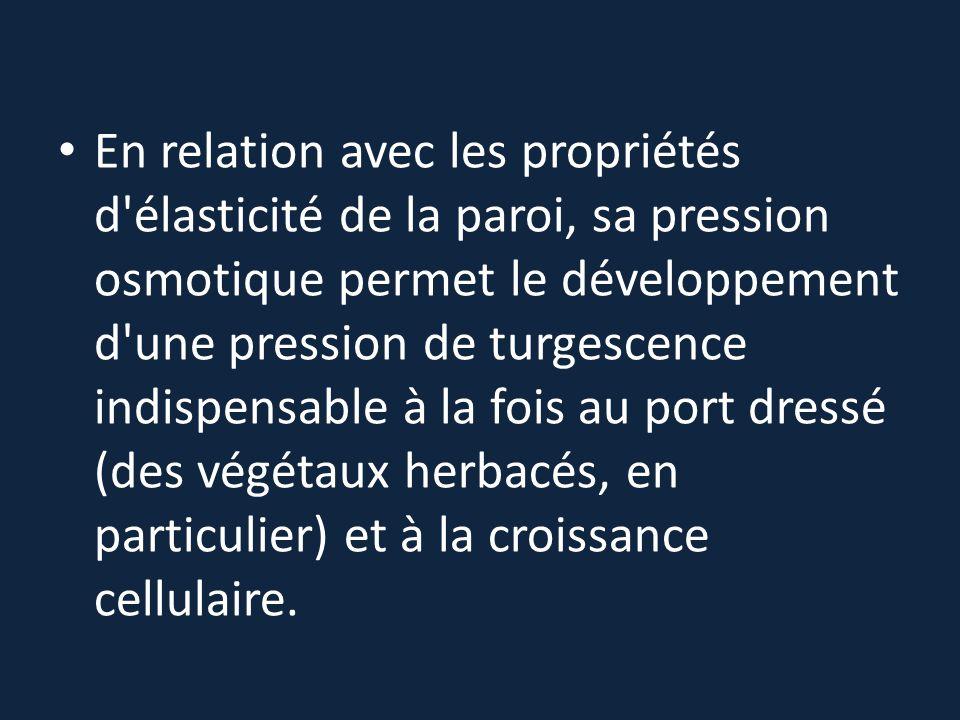 En relation avec les propriétés d élasticité de la paroi, sa pression osmotique permet le développement d une pression de turgescence indispensable à la fois au port dressé (des végétaux herbacés, en particulier) et à la croissance cellulaire.