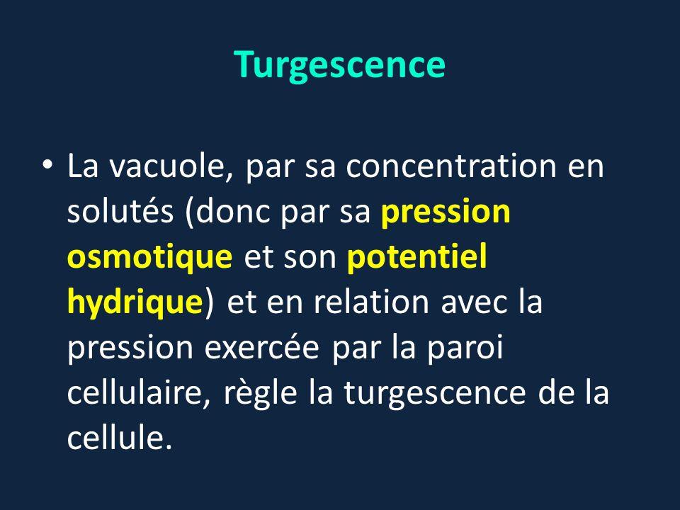 Turgescence