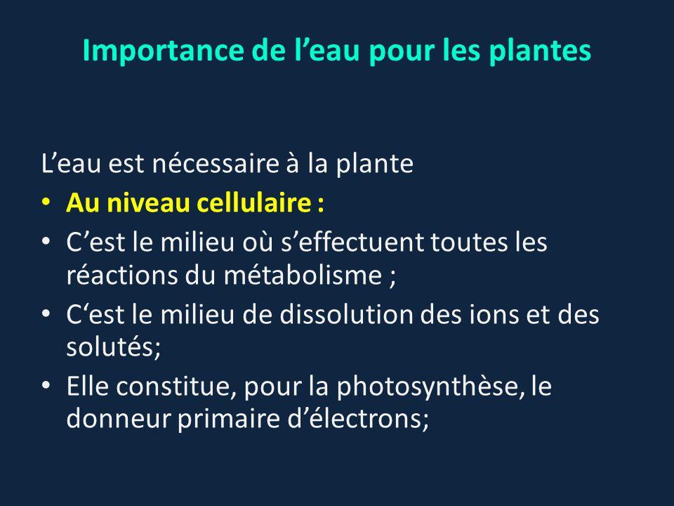 Importance de l'eau pour les plantes